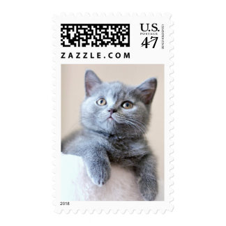 Gray British Shorthair Cat Postage