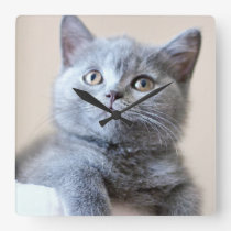 Gray British Shorthair Cat Square Wall Clock