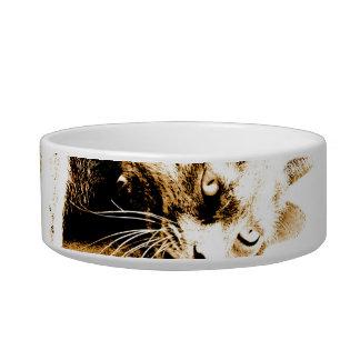 Gray cat bowl