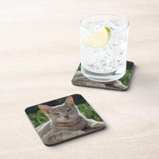 Gray Cat Coasters