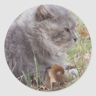 Gray cat in leaves sticker