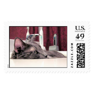 Gray Cat in Sink Postage