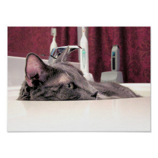 Gray Cat in Sink Poster