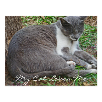 Gray Cat in the Park Postcard