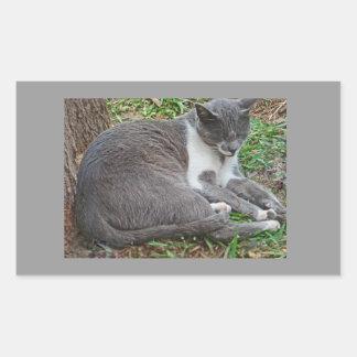 Gray Cat in the Park Rectangular Sticker
