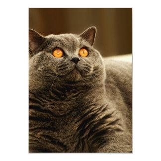 Gray Cat Invitation
