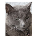 Gray cat letterhead