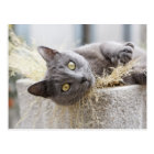 Gray Cat Lying in Pot, Olargues, Herault, France Postcard