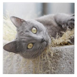 Gray Cat Lying in Pot, Olargues, Herault, France Tile