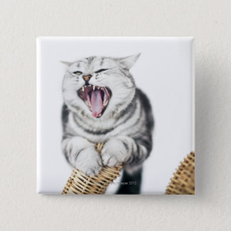 gray cat on white background pinback button