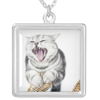 gray cat on white background silver plated necklace