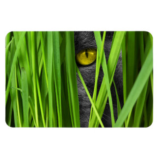 Gray Cat Playing Hide-and-Seek in the Grass Magnet
