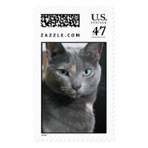 Gray cat postage