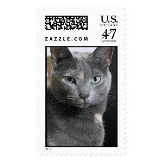 Gray cat postage