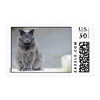 Gray cat Postage Stamp No. 1