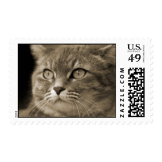 Gray Cat Postage Stamps