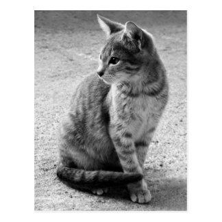 Gray Cat Postcard