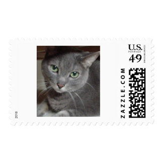 Gray Cat Russian Blue Postage Stamp