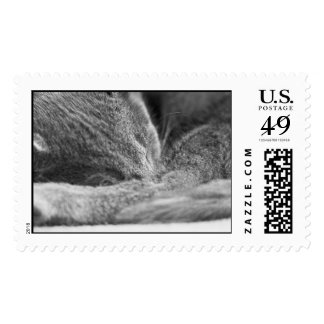 Gray Cat Sleeping Postage Stamps