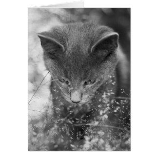 Gray Cat Stalking Card