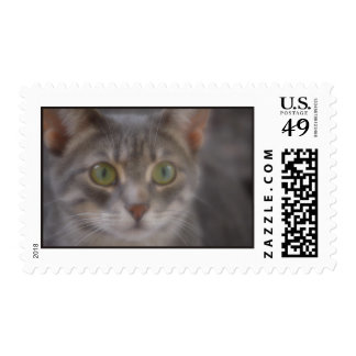 Gray Cat with Green Eyes Stamp