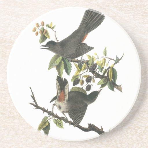 Gray Catbird, John Audubon Drink Coaster