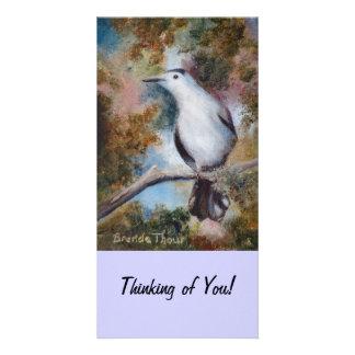 Gray Catbird, Thinking of You! Photo Card
