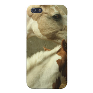 Gray Eventing Horse iPhone Case Case For iPhone 5