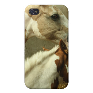 Gray Eventing Horse iPhone Case iPhone 4/4S Case