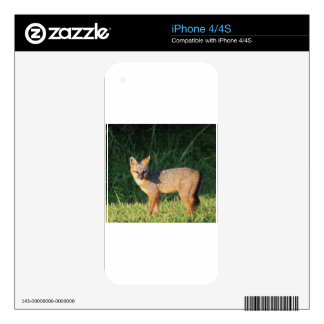 GRAY FOX iPhone 4 SKIN