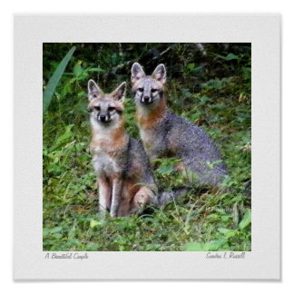 Gray Fox original photo by S.L Russell Poster