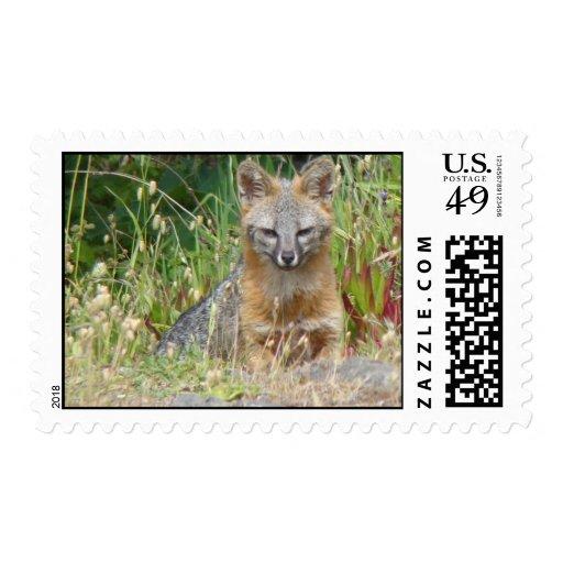 Gray Fox stamp