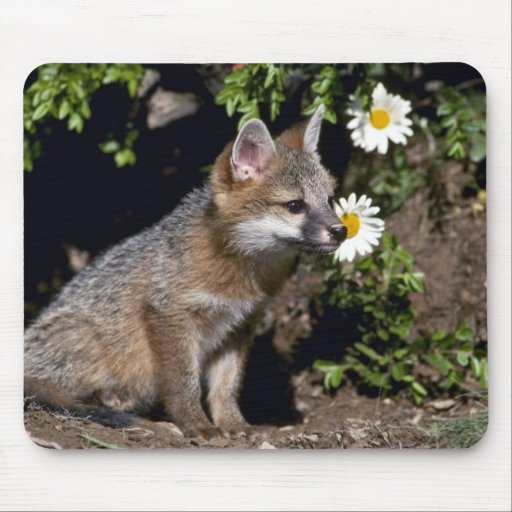 Gray Fox-young kit Mouse Pads