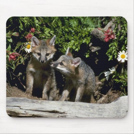Gray Foxes-young kits at den Mouse Pad