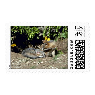 Gray Foxes-young kits at den mouth Postage Stamp