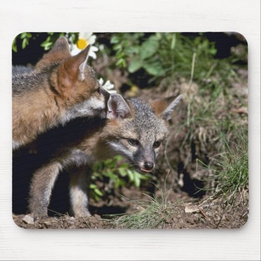 Gray Foxes-young kits Mouse Pad