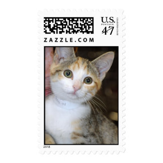 Gray (Grey) and White Tabby Kitten Postage Stamps