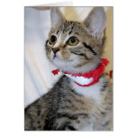 Gray/Grey Tabby Shelter Kitten Greeting/Note Cards