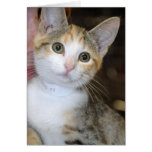 Gray (Grey) Tabby/White Kitten Greeting/Note Cards