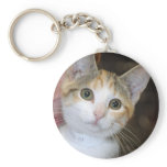 Gray (Grey) Tabby/White Kitten Keychain