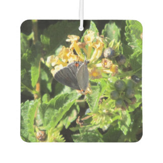 Gray Hairstreak Butterfly Car Air Freshener