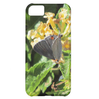 Gray Hairstreak Butterfly iPhone 5 Case