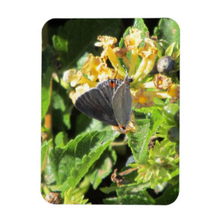 Gray Hairstreak Butterfly Magnet