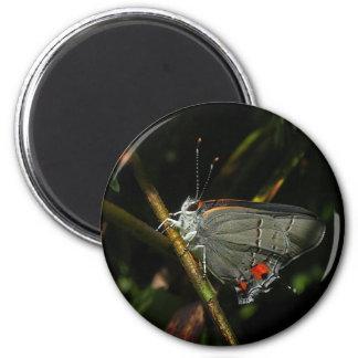Gray Hairstreak Butterfly Magnet