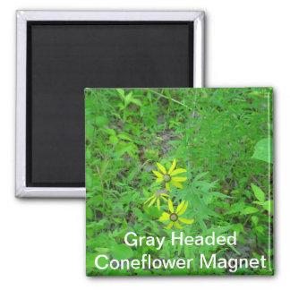 Gray Headed Coneflower Magnet