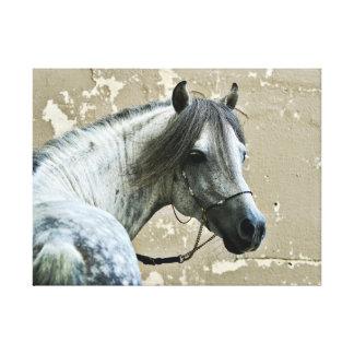 Gray Horse Head Canvas Print