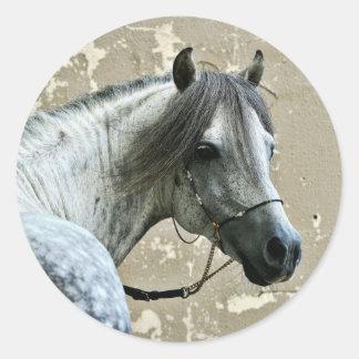Gray Horse Head Classic Round Sticker