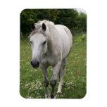 Gray Horse  Magnet Rectangular Magnets