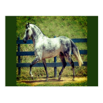 Gray Horse Postcard