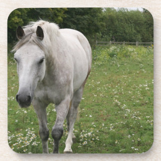 Gray Horse  Set of Coasters